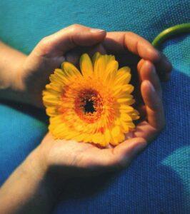 jess-hand-sunflower2
